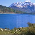 438 L Campotosto(lago pecore)