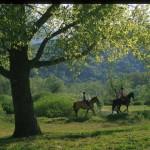 508A cavallo nel Parco